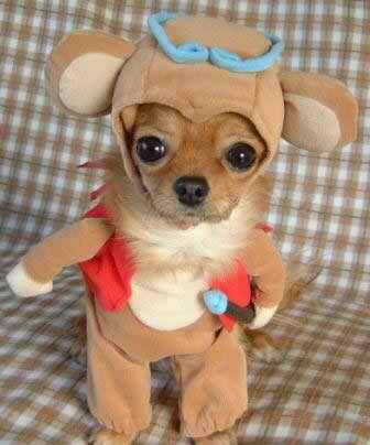 funny pictures of dogs in costumes. Parade Of Funny Dog Costumes!