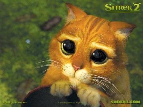http://featherbookseries.files.wordpress.com/2010/09/cute-cat2.jpg